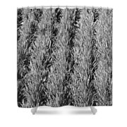 Rural America Black And White Shower Curtain