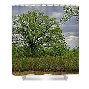 Rural Trees II Shower Curtain