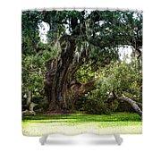Ruskin Oak - Ocean Springs Shower Curtain