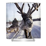 Russia, Siberia, Reindeer Sledding Trip Shower Curtain