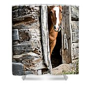 Rustic Horse Scene Shower Curtain
