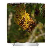 Rusty Leaf Shower Curtain