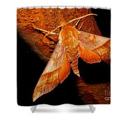 Rusty Sphinx Moth Shower Curtain