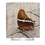 Rusty Tipped Page Butterfly Shower Curtain