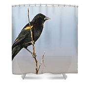 Rwbb On Stick Shower Curtain