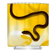 S Shower Curtain