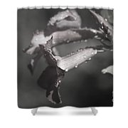 Sabi Star Shower Curtain