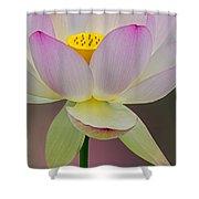 Sacred Lotus Blossom Shower Curtain
