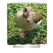 Sad Goose Shower Curtain