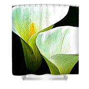 Sad Lillies Shower Curtain