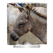 Sad Wild Donkey Shower Curtain