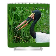 Saddle Billed Stork-00139 Shower Curtain