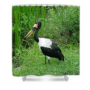 Saddle Billed Stork-136 Shower Curtain