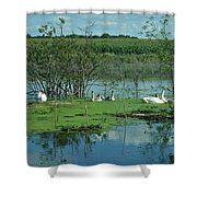 Safe In The Pond Shower Curtain