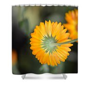 Saffron Wand Shower Curtain