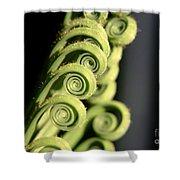 Sago Palm Leaf - 3 Shower Curtain