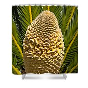 Sago Palm Seed Pod Shower Curtain