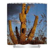 Saguaro 2 Shower Curtain