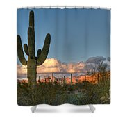 Saguaro At Sunset Shower Curtain