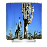 Saguaro At The Saguaro National Park Shower Curtain