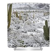 Saguaro Cacti After Rare Desert Shower Curtain