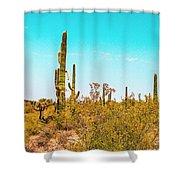 Saguaro Cactus In Organ Pipe Monument Shower Curtain