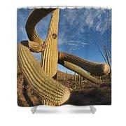 Saguaro Cactus Saguaro Np Arizona Shower Curtain