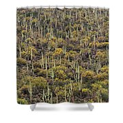 Saguaro Forest At The Foot Of Four Peaks Shower Curtain