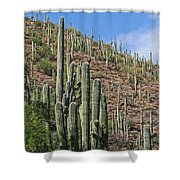 Saguaro Forest In The Superstitions Shower Curtain