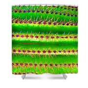 Saguaro  Shower Curtain