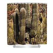 Saguaro Of Many Arms Shower Curtain