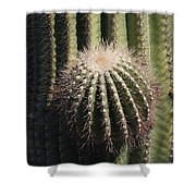 Saguaro With New Arm Shower Curtain