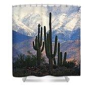 Saguaros And Snow Shower Curtain