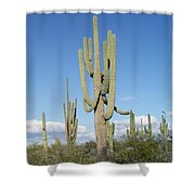 Saguaros With Green Grass Shower Curtain