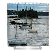 Sailboats In Seal Harbor   Shower Curtain