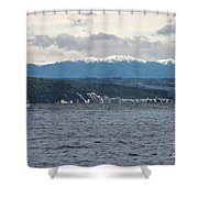 Sailing Lake Taupo Shower Curtain