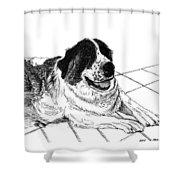 Saint Bernard Bailey Shower Curtain