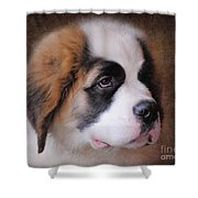 Saint Bernard Puppy Shower Curtain by Jai Johnson
