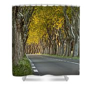 Saint Remy Trees Shower Curtain