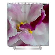 Saintpaulia Shower Curtain