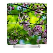 Sakura Tree In Bloom - Featured 3 Shower Curtain