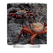 Sally Light Foot Crabs Galapagos Shower Curtain