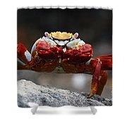 Sally Lightfoot Crab Galapagos Shower Curtain
