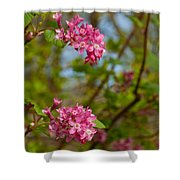 Salmon Berry Flowers Shower Curtain