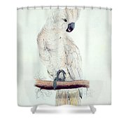 Salmon Crested Cockatoo Shower Curtain