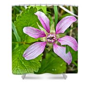 Salmonberry  On Trail To Wapta Falls In Yoho Np-bc  Shower Curtain