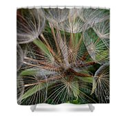Salsify Seeds - 1 Shower Curtain