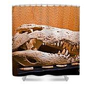 Salt Water Crocodile Skull Shower Curtain