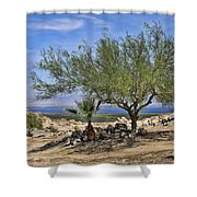 Salton Sea Oasis Shower Curtain