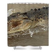 Saltwater Crocodile Shower Curtain